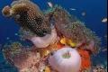 مجموعة صور مدهشة من عالم البحار