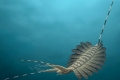 بالفيديو.. أدمغة مجمدة لوحوش بحرية مرعبة عمرها نصف مليار سنة تذهل العلماء