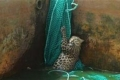 بالصور: «نمر» يعيش أهوال الموت بعد سقوطه في خزان للمياه