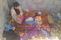 يحدث في فلسطين: حنان تُركت 'عارية' بين الأغنام والدجاج