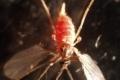 الزراعة وشيء من برمجة العقول... ذبابة أوراق الزيتون