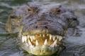 بطول 3 أمتار.. تمساح يسحب رجلا تحت الماء ويفترسه!
