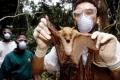 فيضان من الفيروسات يهددنا.. قصة الغابات الغامضة التي يحتمل أن كورونا نشأ بها