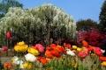 رحلة إلى حديقة أشيكاغا باليابان – رحلة إلى بلاد الزهور الرائعه