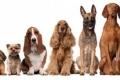 8 حقائق مثيرة للدهشة عن الكلاب