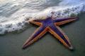 نجوم البحر في صور .. كما لم تشاهدها من قبل !