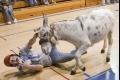 رياضة كرة السلة بإستخدام الحمير رياضة رائجه في الغرب الأمريكي (صور + فيديو)
