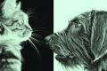 قصة شهر أصيبت فيه بريطانيا بـ «هستيريا إبادة الحيوانات الأليفة»: مقتل 750 ألف كلب وقطة