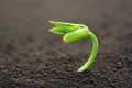 هل من الممكن أن تنمو نباتات في معدتنا إن ابتلعنا البذور ؟