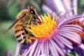 دراسة: النبات والنحل يتواصلان بلغة الإشارة