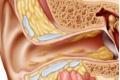 باحثون يكتشفون طريقة فرز الأذن للأصوات في الزحام