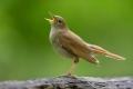 لماذا يعد صوت العصافير أفضل ترياق لنا لعلاج القلق المحيط بنا؟