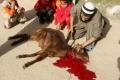 ذبح أضحية العيد أمام الأطفال قد يعرضهم لصدمات نفسية