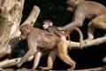 إجلاء زوار حديقة حيوان بسبب قرود الرباح
