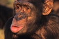 لماذا لا تستطيع الحيوانات التكلّم كالبشر؟