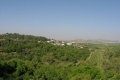 الاحتلال يدمر 70% من غابات فلسطين