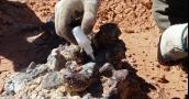كشف يحلّ ألغازاً.. مقبرة ديناصورات منذ 220 مليون سنة