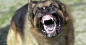 """""""الكلاب الشياطين"""" تأكل رجلا حيا في إسبانيا"""