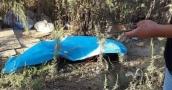تفاصيل جديدة في حادثة العثور على جثة فتاة في نابلس