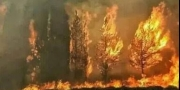لبنان تحترق.. ذعر بين اللبنانيين بسبب حرائق الغابات وطوارئ ل ...