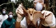 فيضان من الفيروسات يهددنا.. قصة الغابات الغامضة التي يحتمل أ ...