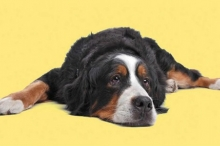 هل الحيوانات تعاني من الأمراض العقلية مثل البشر؟