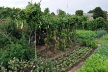 الزراعة البيئية من منظور التنمية التحررية