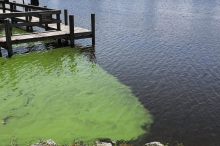 بالصور.. طحالب سامة تجتاح فلوريدا والولاية تعلن الطوارئ