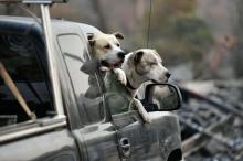الكلاب يمكن أن تشم رائحة سرطان الرئة بدقة تصل إلى ...