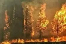 لبنان تحترق.. ذعر بين اللبنانيين بسبب حرائق الغابات وطوارئ للسيطرة ...