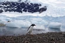 أنتاركتيكا تذوب: 20 % من الجليد اختفى خلال 10 أيام ...