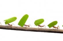 لماذا يسير النمل في خط مستقيم؟