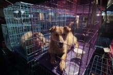 بالصور ..تعرف على أغرب مهرجان صيني لأكل لحم الكلاب