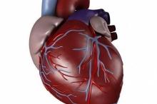 هل حقا يتوقف قلبك عند العطاس ؟