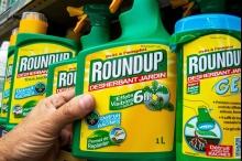 """""""مونسانتو"""" تفبرك دراسات مزورة لإخفاء الحقائق العلمية عن مبيداتها المسرطنة ..."""