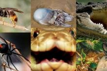 أكثر الحيوانات فتكاً في أستراليا... نتيجة لن تتوقعها