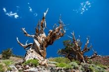 ما هو أقدم كائن حي فوق الأرض؟