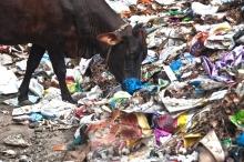 بسبِ أضرارها الصحية والبيئية...حملة لمكافحة أكياس البلاستيك في المخابز مطلع ...