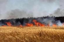 حريق يلتهم مساحات واسعة من الأحراش والأراضي الزراعية بنابلس