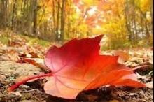 فصل الخريف يبدأ الجمعة ويستمر 89 يوم و22 ساعة و26 ...