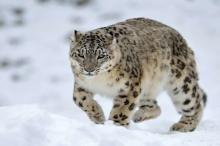 علماء البيئة يكشفون 600 كائن حي مهدد بالانقراض