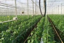 """التكنولوجيا """"المتقدمة"""" والزراعات الكيميائية والمحاصيل المعدلة وراثيا هل تشكل ضمانة ..."""
