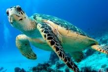 سرقة بيض السلاحف من محمية بإندونيسيا