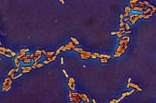 العلماء يقتربون من إعادة كتابة الشيفرة الوراثية