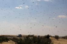 """بسبب الحشرات.. """"كارثة بيئية"""" في الطريق"""