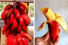 أكثر أصناف الفاكهة ندرةً في العالم!