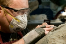موناليزا الديناصورات أحفورة تكشف أسرار غير متوقعة