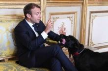 """كلب الرئيس الفرنسي """"فعلها"""" في صالون الإليزيه"""