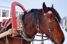 هل تعلم السبب أن الخيول تنام وهي واقفة ؟