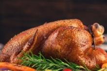 أميركية عشقت الدجاج فقررت دخول هذا العالم لتواجه الصدمة.. ما ...